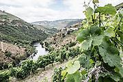 Douro Valley, Portugal.
