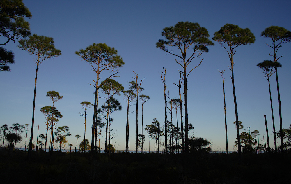 St. Joseph Peninsula State Park, Gulf County, FL