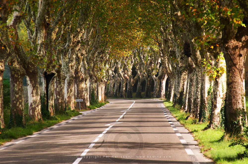 A tree lined country road allee with plane trees platanes. Coming towards the curve. Saint Remy Rémy de Provence, Bouches du Rhone, France, Europe