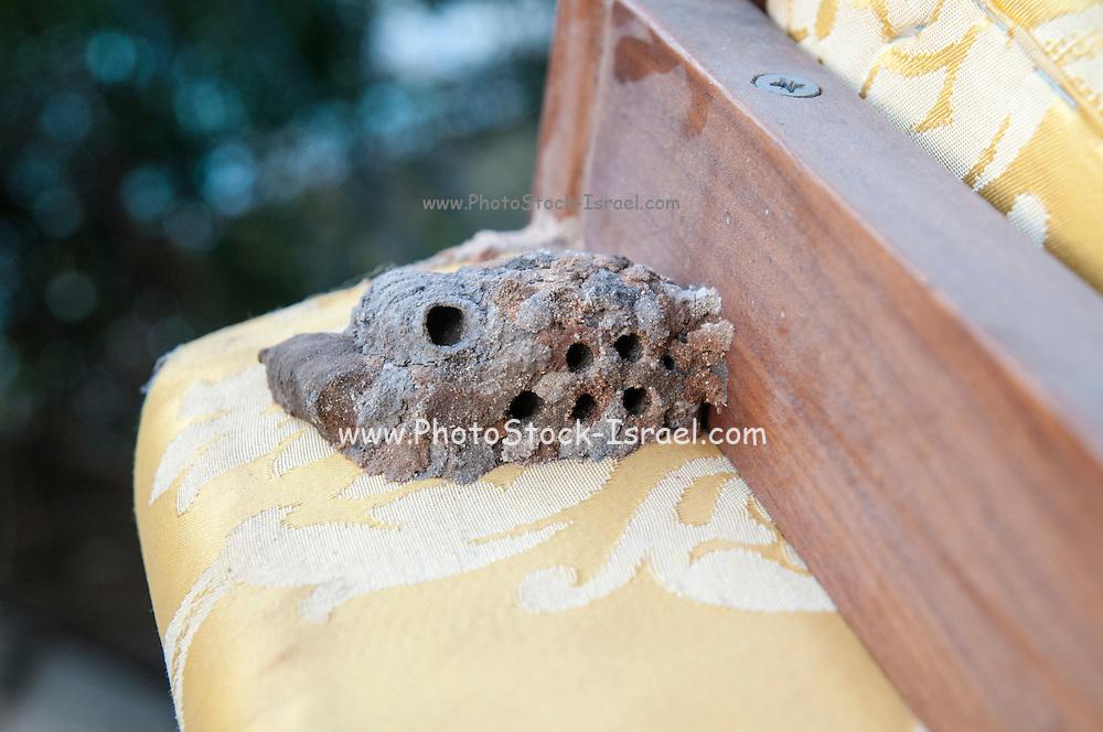 A hornet's nest built under a chair Photographed in Tel Aviv, Israel