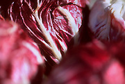 Close up selective focus photo of some Radicchio leaves