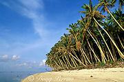 coconut palms on beach, Tobi Island, Southwest Islands, Palau or Belau, Micronesia, ( Western Pacific Ocean )