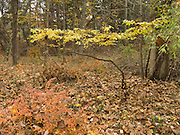 small tree during fall season in the woods