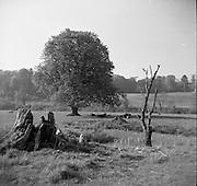 Fishing at Enniskeery, Co. Wicklow.04/07/1953