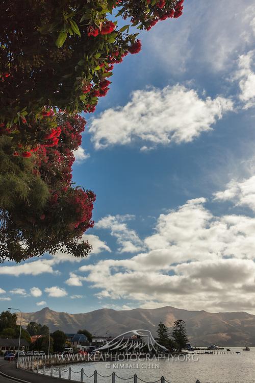 Rata Tree, Akaroa, New Zealand