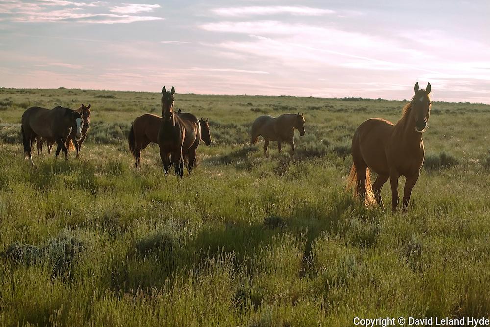 Wild Mustangs, hazy sky, morning sun, tall grass, Interstate 80, Central Wyoming II, copyright 2016 David Leland Hyde.