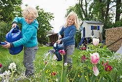 Two young blond kids watering flowers in garden