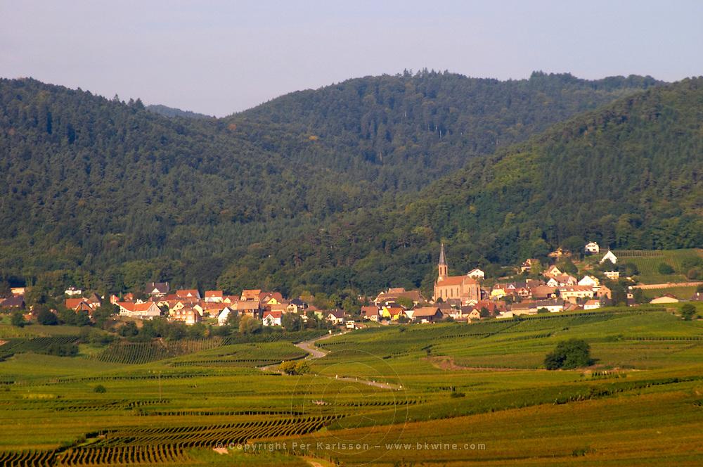 vineyard hussern les chateaux eguisheim alsace france