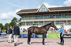 Sydney Collier, (USA), Willi Wesley - Horse Inspection Para Dressage - Alltech FEI World Equestrian Games™ 2014 - Normandy, France.<br /> © Hippo Foto Team - Jon Stroud<br /> 25/06/14