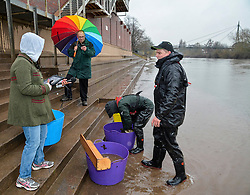 © London News Pictures. 28/02/2014. Worcester, UK.   Members of the Environment Agency  rescue fish trapped on Worcester racecourse when flood waters subsided. Fish, including roach, perch, bream and pike, some weighing over 10lbs, were caught using a large hand net. Photo credit: LNP
