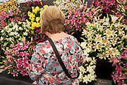 Harrogate Flower Show, North Yorkshire, England, UK. The Plant Pavilion is full of every variety of flowering plant you can think of, with blooms of all shapes, sizes and colours. People blending in with the flowers.