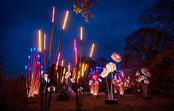 © Licensed to London News Pictures. 21/11/2017. London, UK. Illuminated representations of reeds and flowers decorate teh grounds at the opening of Christmas at Kew at Royal Botanical Gardens, Kew. The spectacular displays are illuminated by over one million tiny twinkling lights placed all over Kew Gardens - open Wednesdays – Sundays from 22 November 2017 – 2 January 2017. London, UK. Photo credit: Peter Macdiarmid/LNP