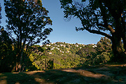 Forest, trees and Landscape near Whitianga North Island New Zealand
