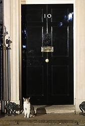 Larry the cat waits to enter Downing Street, London, on the day Boris Johnson became the new Prime Minister.