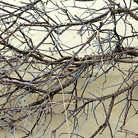 Europe, Ireland, Brittas Bay. Branches of Brittas bay Dunes.