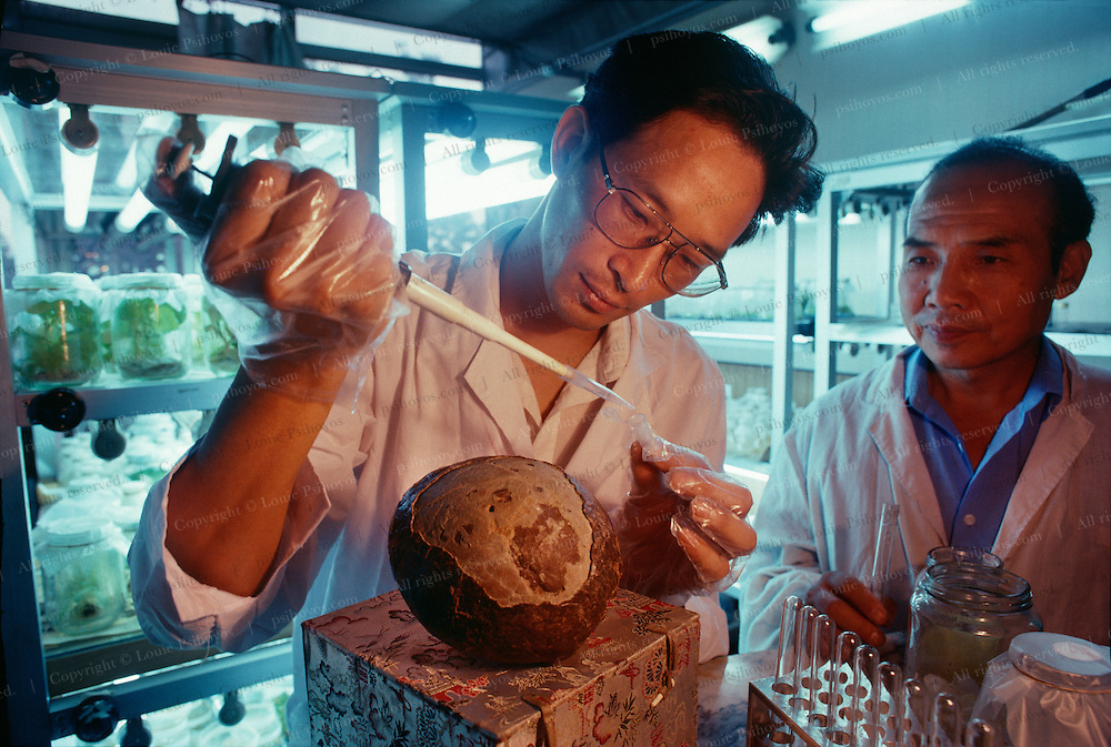 Molecular Biologist Chen Zhangliang of the College of Life Sciences at Peking University who works with paleontologist Zhang Yun says he can extract DNA from dinosaur eggs.