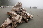 Henry (left) and Zach Podell-Eberhardt hike past large driftwood on a beach along the West Coast Trail, British Columbia, Canada.