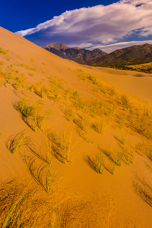 Indian ricegrass and blowout grass grow naturally on the dunes and is nature's way of stabilizing the sands from wind erosion.The Great Sand Dunes with the Sangre de Cristo Mountains behind, Great Sand Dunes National Park and Preserve, near Mosca, Colorado USA. The park contains the tallest sand dunes in North America, rising about 750 feet above the floor of the San Luis Valley.The Great Sand Dunes with the Sangre de Cristo Mountains behind, Great Sand Dunes National Park and Preserve, near Mosca, Colorado USA. The park contains the tallest sand dunes in North America, rising about 750 feet above the floor of the San Luis Valley.