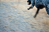 My dog Lilly, a border collie and rat terrier mix, running in Boeing Creek Park, Shoreline, Washington.