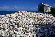 mountains of empty shells of queen conch, Strombus <br /> gigas, surround a fisherman's shack on Long Caye,<br /> Belize Barrier Reef, Central America ( Caribbean Sea )