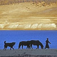 MONGOLIA, Darhad Valley. Young herder walks his horses along shore of (Lake) Dood Nuur.