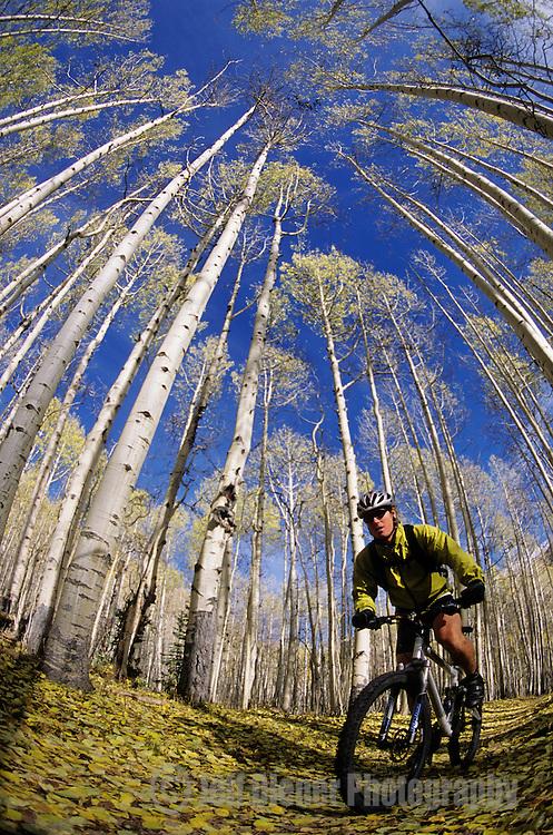 A mountain biker rides down a leaf covered trail in the La Sal Mountains near Moab, Utah.