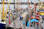 Nederland, Breskens, 5-9-2019 In de haven van deze kustplaats in Zeeuws Vlaanderen liggen vissersschepen aan de kade. Het is moeilijk overleven in de visserij .Foto: Flip Franssen