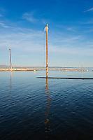 Abandoned telephone poles in water, Bombay Beach, Salton sea, California