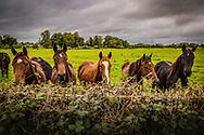 County Meath, Ireland