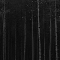 Just before dawn at Thetford Forest yesterday.