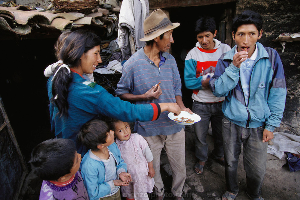 The Salvador Ticona-Ramos family shares freshly harvested and fried waykjuiro worms in the courtyard of their home in Chinchapuijo, Peru. Image from the book project Man Eating Bugs: The Art and Science of Eating Insects.