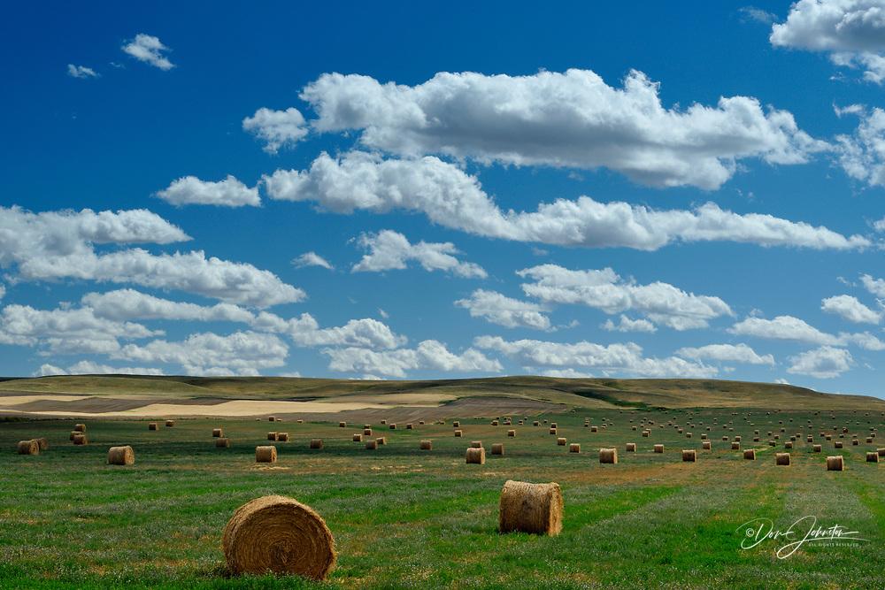 Hay rolls in the prairie, Milk River, Alberta, Canada