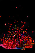 Paint Sculpture - High speed photography of splashes of paint