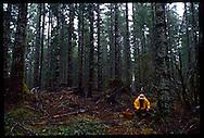 Jack Czarnecki harvesting wild chanterelles in the Oregon Coast Range