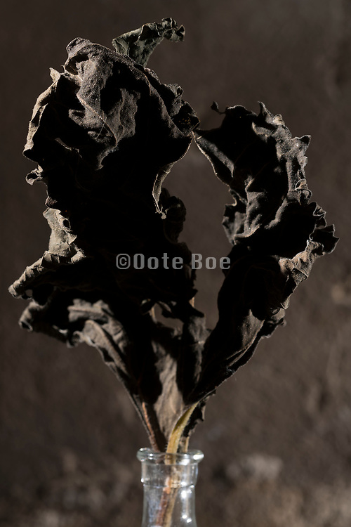 dried brown collored leaf still life