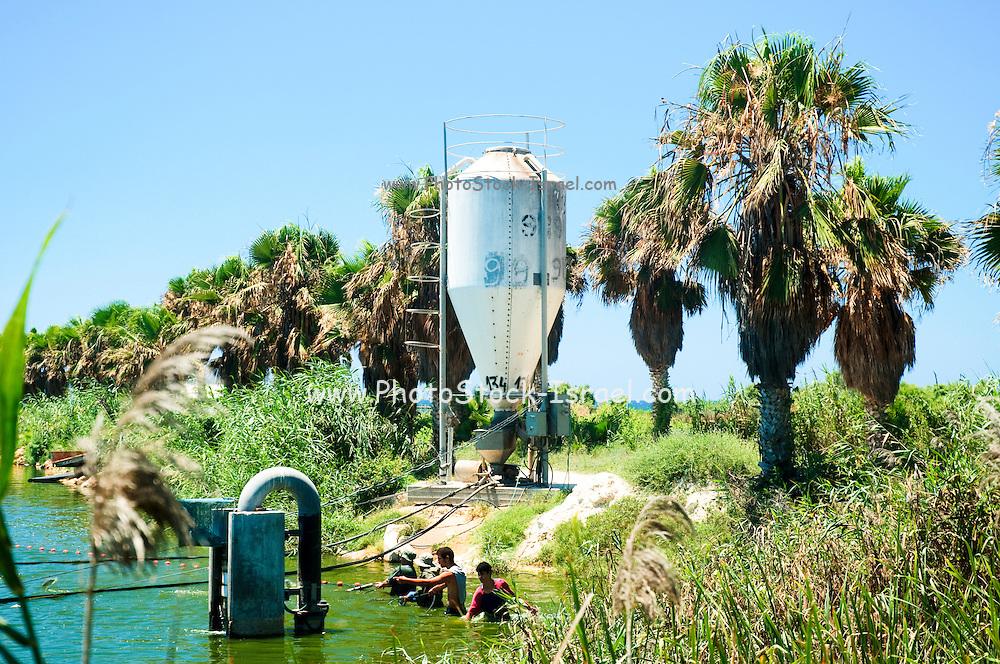 Israel, Coastal Plains, Kibbutz Maagan Michael, The feeding silo at the fish pool