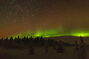 Northern Lights over the FInnish forest to the northwest of Inari. showing an active band splitting into multiple fingers.