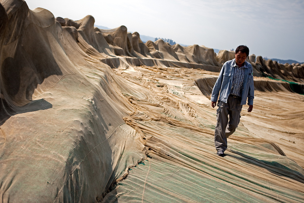 Korean man walking beside the wave-breaks at Bukbu beach / Pohang, South Korea, Republic of Korea, KOR, 04 October 2009: