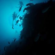 Dive Spot: Magic Mountain