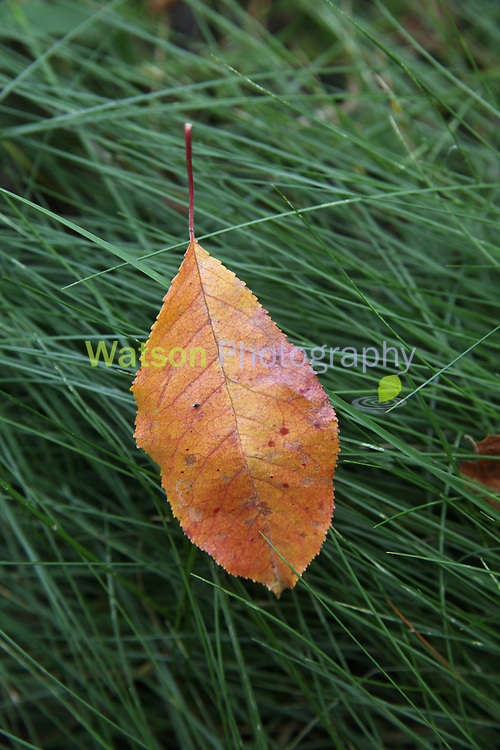 Autumn Catch