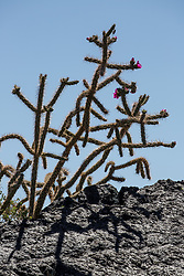 Cactus tree and volcanic rock formation
