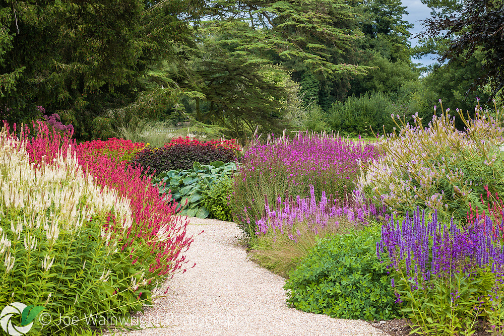 Brightly coloured herbaceous perennials line a path through the Floral Labyrinth at Trentham Gardens, Staffordshire - photographed in August. This image is available for sale for editorial purposes, please contact me for more information.