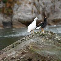 Seno Chico (Small Fjord) in Alberto de Agostini National Park, Tierra del Fuego, Chile.