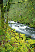 Moss-covered rocks and trees along Tanner Creek, Columbia River Gorge National Scenic Area, Oregon