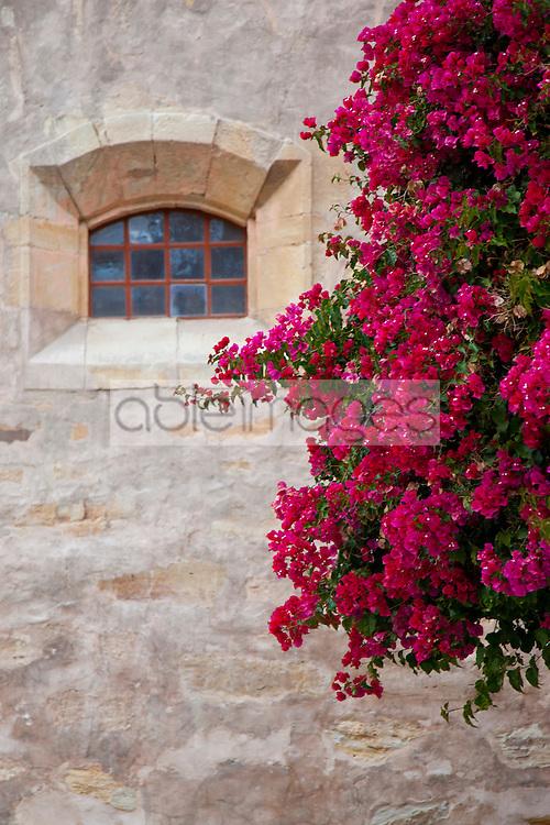 Pink Bougainvillea on Outside Wall