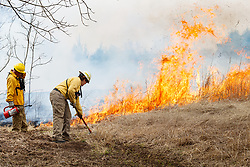 Fire professional managing fire line during controlled burn on Wilt's Prairie, a Blackland Prairie remnant near Ennis, Texas, south of Dallas. Texas, USA.