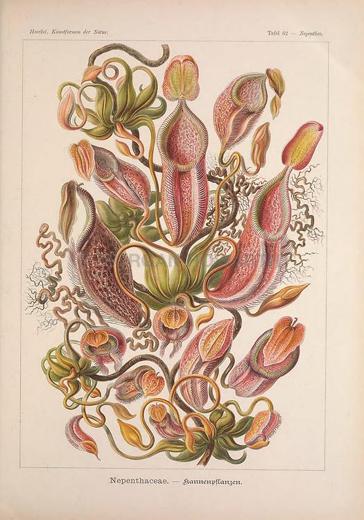 Kunstformen der Natur<br /> Leipzig und Wien :Verlag des Bibliographischen Instituts,1899-1904.<br /> https://biodiversitylibrary.org/page/47388295