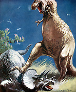 Tricerotops, a horned dinosaur, held down by Tyrannosaur.  Artist's reconstruction of fight between two giant reptiles of the Mesozoic Era (225,000,000  -65,000,000 years ago) published c1920