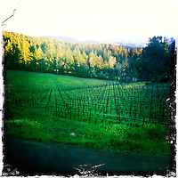 25 February 2012: Cade winery spring vines in Howell Mountain, Napa, California.  iPhone Stock Photo