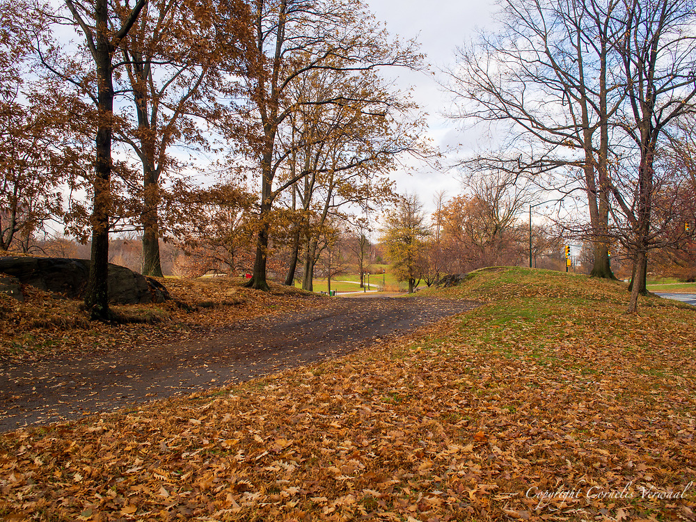 The Bridle Park in Central Park, north-east of the North Meadow.